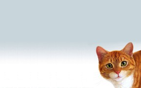 Picture cat, red, white background, Peeps