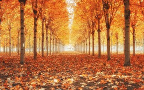 Wallpaper falling leaves, Golden autumn, alley in the Park