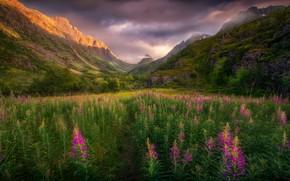 Picture field, summer, flowers, mountains, rocks, meadow, path, Ivan-tea