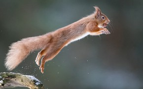 Picture background, jump, protein, flight