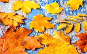 Picture autumn, leaves, background, Board, colorful, maple, wood, autumn, leaves, maple