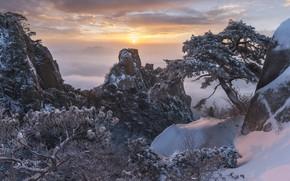 Picture winter, snow, trees, landscape, mountains, nature, fog, rocks, dawn, morning, pine, Korea, reserve, jae youn …