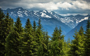 Picture forest, clouds, snow, mountains, the slopes, tops, view, height, ate, tree, coniferous