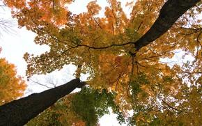 Picture nature, autumn, tree
