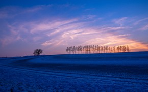 Picture field, trees, sunset