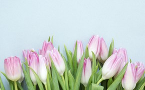 Picture flowers, pink, bouquet, spring, tulips