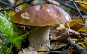 Picture autumn, leaves, mushroom