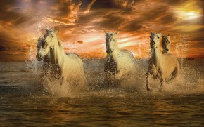 Picture sea, wave, the sky, the sun, clouds, sunset, squirt, rendering, shore, horses, horse, bathing, white, …