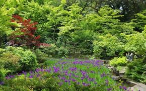 Picture nature, Park, Japan