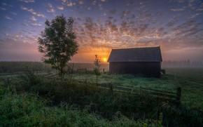 Picture landscape, fog, house, Rosa, dawn, morning