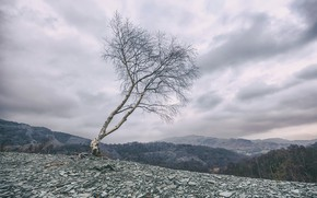 Picture the sky, tree, mountain