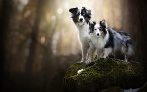 Picture stone, moss, a couple, bokeh, two dogs