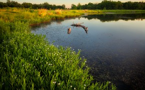 Picture summer, grass, lake, shore, snag, flowers, pond