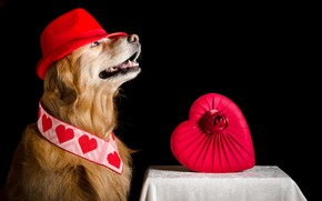 Picture background, heart, dog, hat
