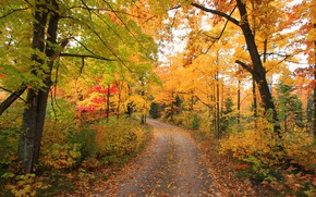 Picture road, autumn, forest, photo