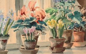 Picture flowers, sill, pots, window, Watercolor, Olga Kulikovskaya-Romanova