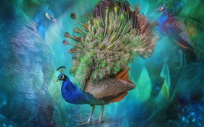 Picture abstraction, bird, feathers, tail, peacock