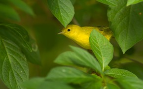 Picture leaves, yellow, bird