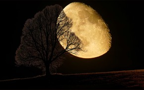 Picture night, tree, the moon
