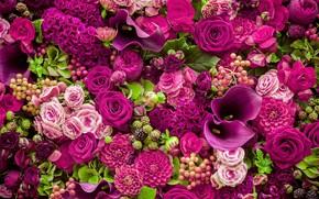 Picture roses, Calla lilies, dahlias