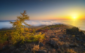 Picture the sun, lake, the steppe, tree, dawn, vegetation, morning, Baikal, taiga, Rev Alex, Alex Revs