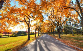 Picture road, autumn, tree