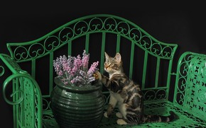 Picture cat, cat, shop, kitty, vase with flowers, Kota