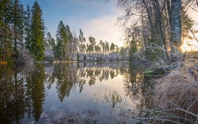 Picture forest, the sky, water, the sun, trees, reflection, river, the bushes, frost, Virojoki