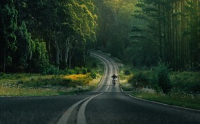 Picture road, forest, flowers, transport, Dukati