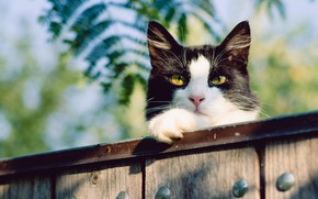 Wallpaper cat, cat, face, leaves, nature, background, black and white, Board, the fence, yellow eyes