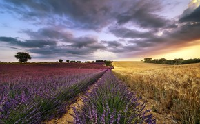 Picture field, summer, the sky, nature