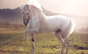 Picture background, horse, meadow