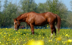 Picture flowers, horse, meadow