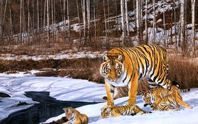 Picture winter, forest, snow, figure, picture, art, painting, tigers, tigress, the cubs, pond, cubs, mother, Simon …
