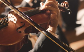 Picture Violin, Concert, Strings