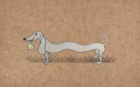 Picture figure, dog, Dachshund