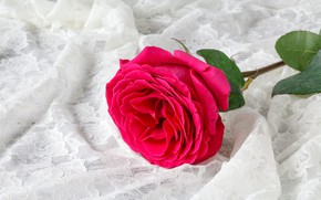 Picture flower, background, rose, fabric