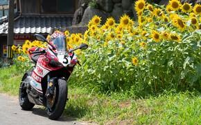 Picture bike, ducati, PANIGALE