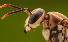 Picture macro, profile, insect