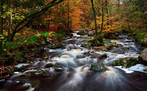 Picture autumn, forest, trees, river, streams