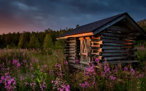 Picture summer, sunset, flowers, house