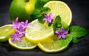 Picture leaves, drops, flowers, lemon, lime, fruit, wet, slices
