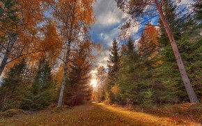 Wallpaper road, autumn, forest, grass, leaves, the sun, clouds, light, trees, nature, Park, blue, trunks, glade, ...