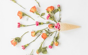 Picture white, background, roses, flower, roses, clove, waffle cone
