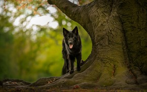 Picture nature, each, tree, dog