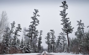 Picture winter, frost, road, forest, the sky, snow, trees, pine, silhouettes, the bushes