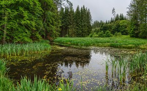 Picture greens, forest, grass, trees, pond, the reeds, Germany, Bayern, Augsburg, The district of