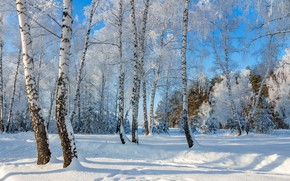 Picture snow, birch, a wonderful day, frost and sun