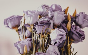Picture flowers, background, bouquet, purple, buds, lilac, eustoma