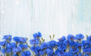 Picture flowers, background, blue, cornflowers